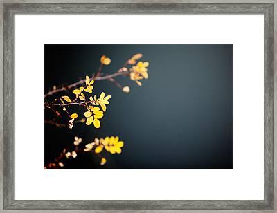 Brambled Autumn Leaves Framed Print