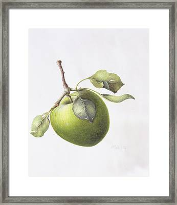 Bramley Apple Framed Print by Margaret Ann Eden