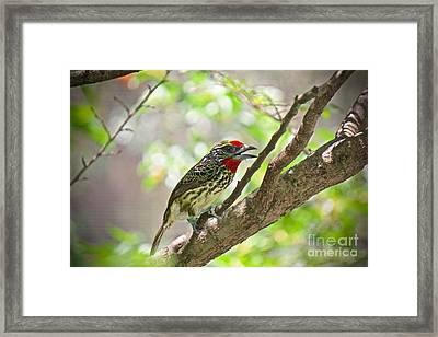 Branch Beauty Framed Print