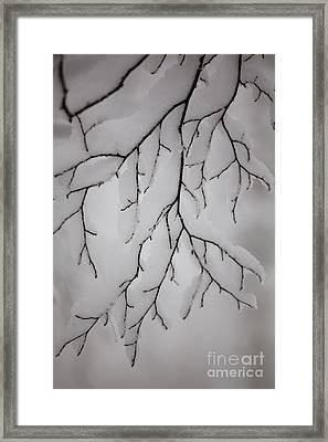 Branch Framed Print by Gabriela Insuratelu