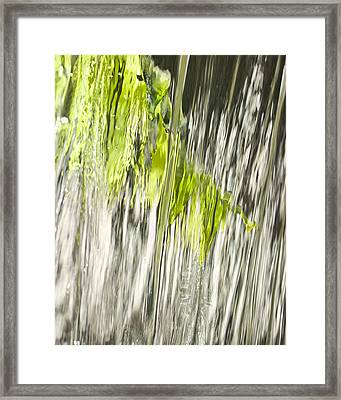 Branch In Fountain Framed Print