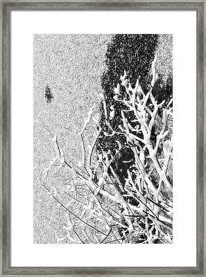 Branch In Lake Ice With Snow Black And White  Framed Print by Randy Steele