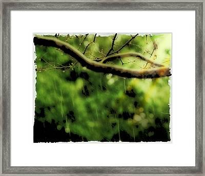 Branch In The Rain Framed Print by Ken Gimmi