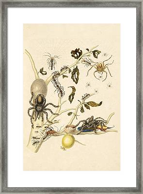 Branch Of A Guava Tree With Leaf-cutter Ants Framed Print by Celestial Images