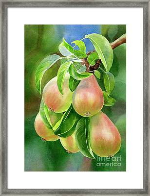 Branch Of Bronze Pears Framed Print by Sharon Freeman