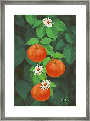 Branch Of Mandarin Orange Framed Print
