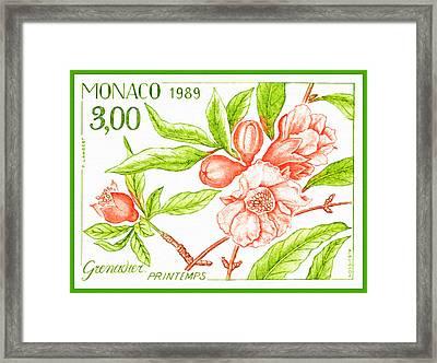 Branch Of Pomegranate Tree In Spring Framed Print