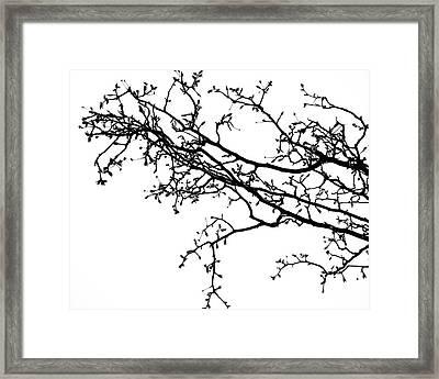 Branch Framed Print by Slade Roberts