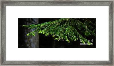 Branch Framed Print