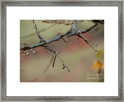 Branch With Water Abstract Framed Print