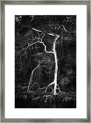 Branched Framed Print by Marvin Spates