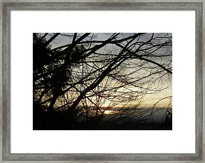 Branches At Sunset Framed Print by Jaeda DeWalt