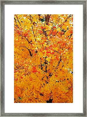 Branches Beneath Fall Beauty Framed Print by Peter  McIntosh