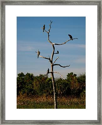 Branches For Birds Framed Print by Fanny Diaz