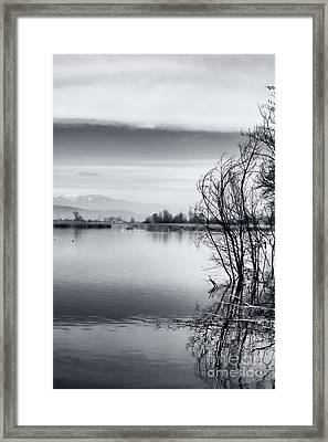 Branches Framed Print by Gabriela Insuratelu