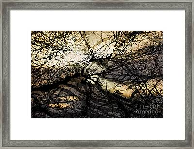 Branches Illuminated By Bright Sunshine, Double Exposed Image Framed Print by Nick Biemans