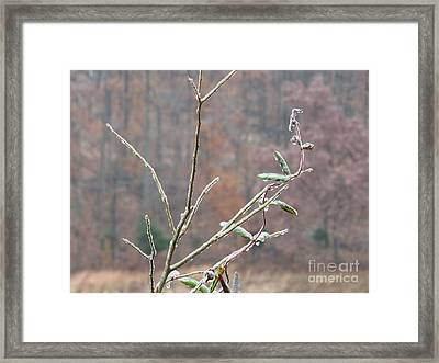 Branches In Ice Framed Print