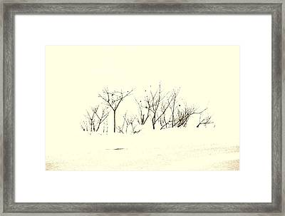 Branches In Snow Framed Print