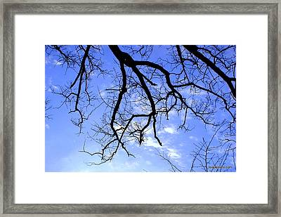 Branches Framed Print by Lois Lepisto