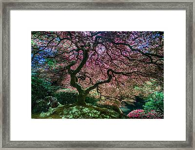 Branches Of Love Framed Print