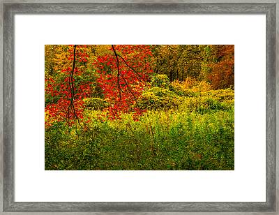 Branches Of Red Framed Print by Karol Livote