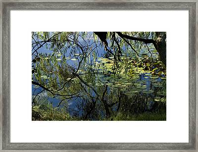 Branches Of Trees Reflected In A Lily Framed Print by Todd Gipstein