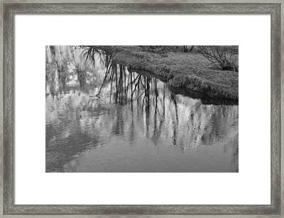 Branches Reflected Framed Print