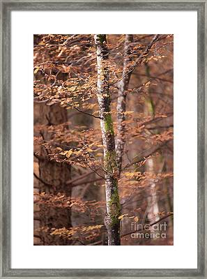 Branches Framed Print by Svetlana Sewell