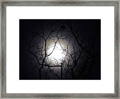 Branches To The Moon Framed Print