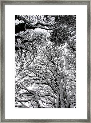 Branches With Snow Framed Print by Mark Denham