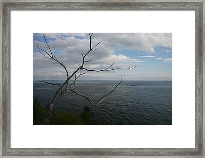 Branching Out Framed Print by Dennis Curry