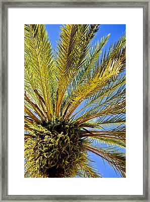 Branching Out Framed Print by Sarita Rampersad