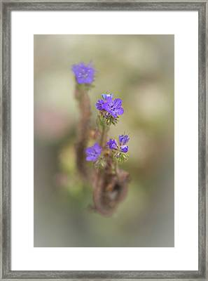 Framed Print featuring the photograph Branching Phacelia by Alexander Kunz