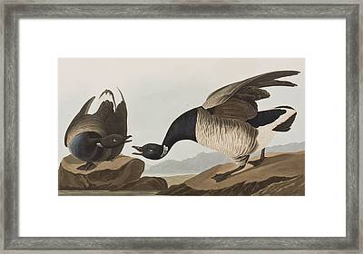 Brant Goose Framed Print by John James Audubon