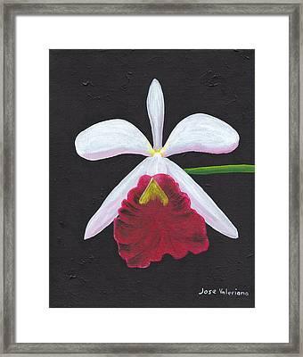 Brassalove Nodosa-rosita Framed Print