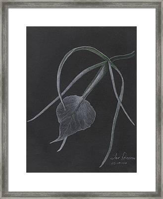 Brassalove Nordosa Orchid Framed Print