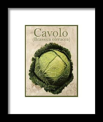 Cabbage Framed Prints