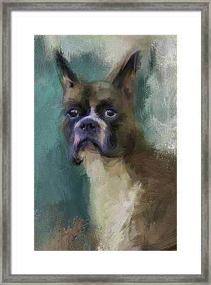 Brave Boxer Framed Print