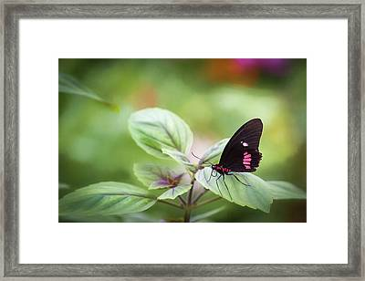 Framed Print featuring the photograph Brave Butterfly  by Cindy Lark Hartman