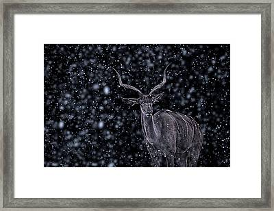 Braving The Blizzard Framed Print