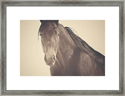 Brazen And Bold Framed Print by Amanda Smith