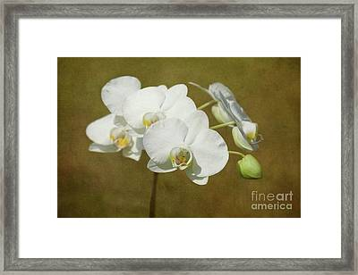 Brazen Beauty Framed Print