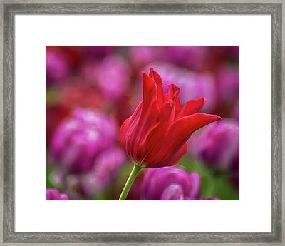 Framed Print featuring the photograph Brazenly Delicate by Bill Pevlor