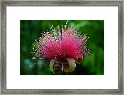 Brazilian Barbers Brush Framed Print