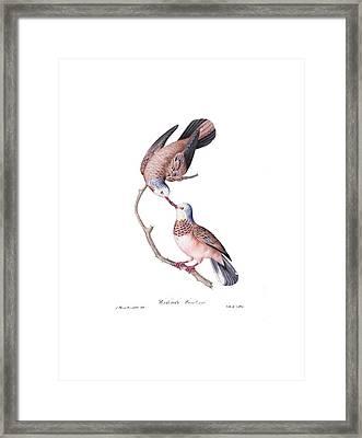 Brazilian Birds Framed Print by Philip Ralley