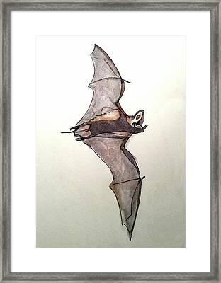 Brazilian Free-tailed Bat Framed Print