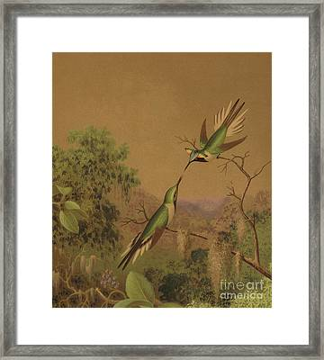 Brazlilian Hummingbirds Iv Framed Print
