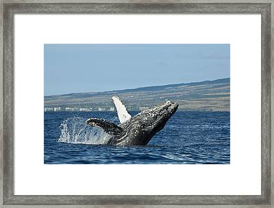 Breach Near Maui I Framed Print by Dave Fleetham - Printscapes