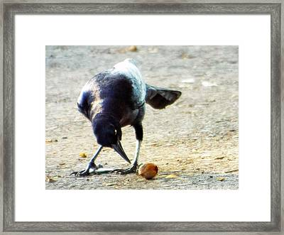 Break For Lunch Framed Print