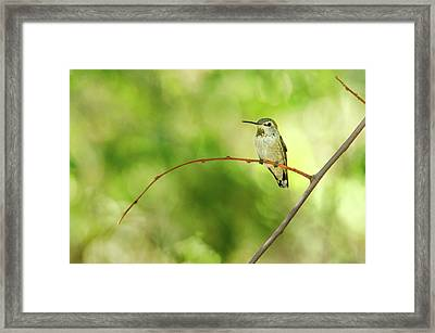 Break Time Framed Print by Emily Bristor